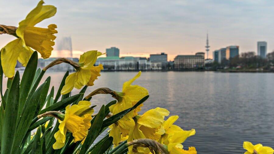 Goedkope stedentrip Hamburg: parken