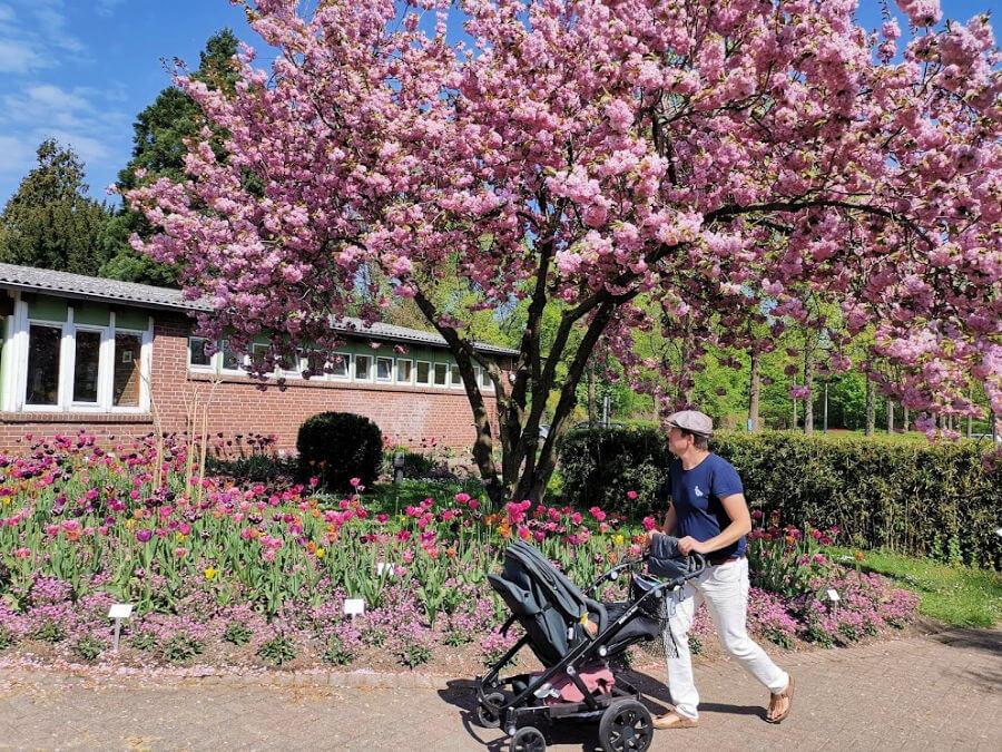 Lentebloesem bij de ingang van de botanische tuin in Hamburg