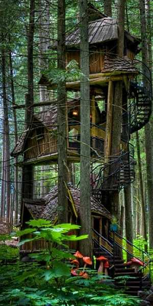 Standout Tree House Designs Not Just For Kids Anymore