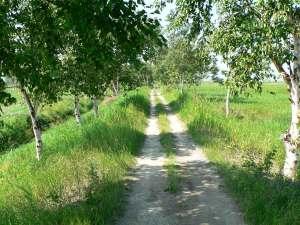 Le sentier de l'aboiteau