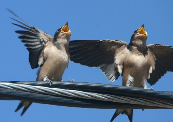 IMG_3760 two birds singing