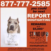 REPORT DOGFIGHTING