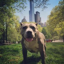 TODAY New York City Stands Up For Pits!!!!!