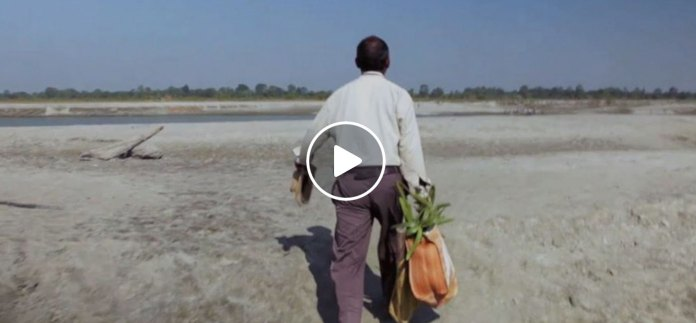 Man Plants Trees In Same Spot For 37 Years. The Results Are Stunning!