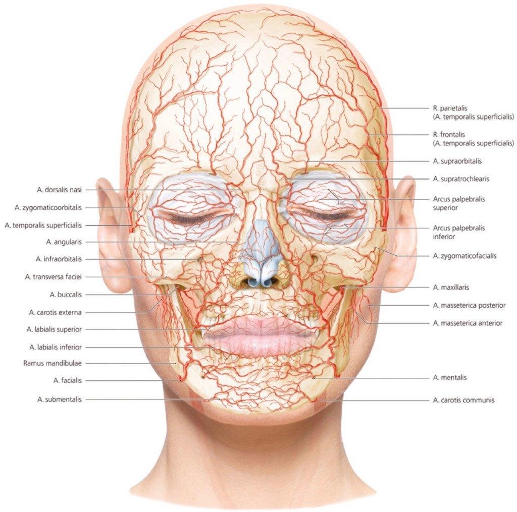 lip blood vessel | Julakutuhy.co