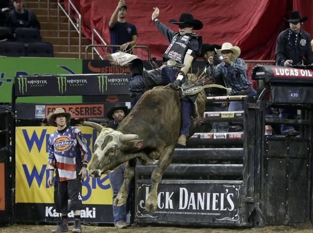 rodeo insider professional bull