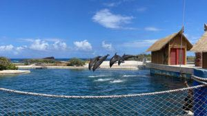 COURTESY SEA LIFE PARK                                 The park also said it would be adding more Dolphin Encounter Programs starting March 31. The Dolphin Encounter specials are currently available by reservation during two time slots on Mondays, Tuesdays, Wednesdays, and Fridays.