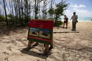Overnight camping at Blake will close this summer to protect nesting sea turtles