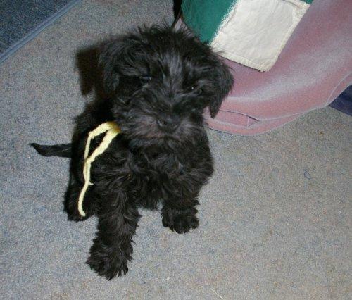 Orion Adoption Photo