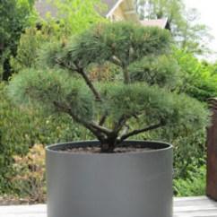Pine Kitchen Chairs Ireland Ikea Office Chair Markus Extra Large Round Outdoor Planter Pot 30