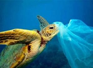 sea turtle with plastic bag