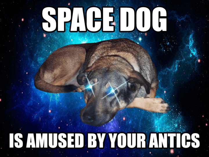 space-dog-is-amused