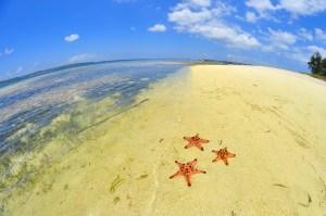 Starfish helping people