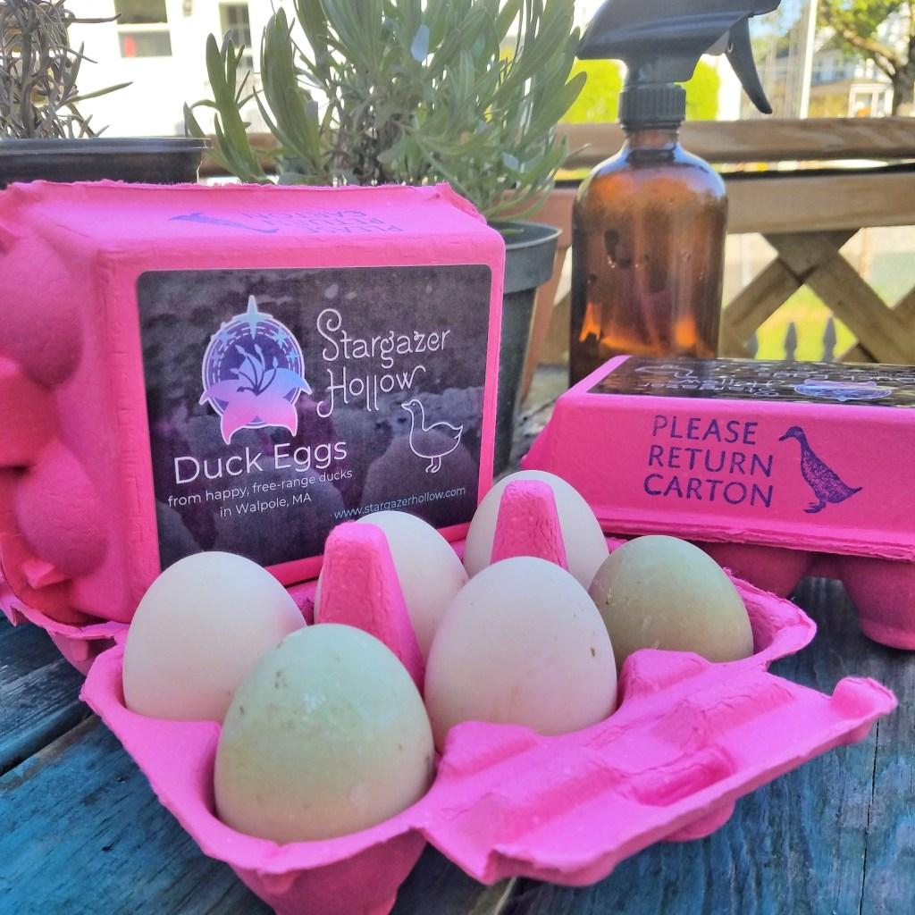 Carton of 6 duck eggs
