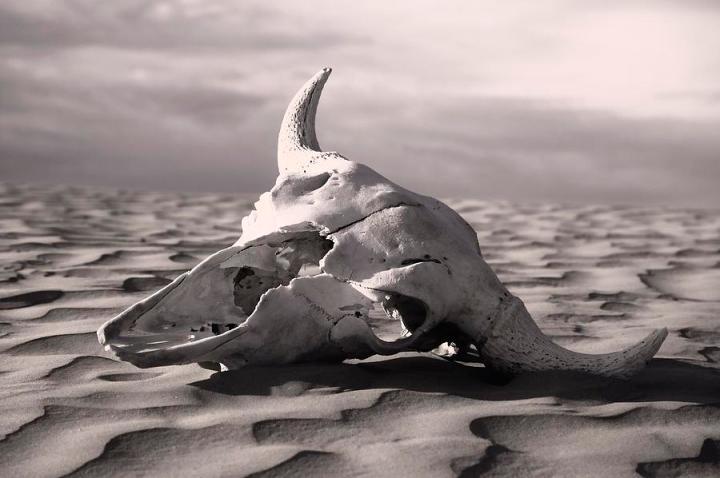 2-skull-in-desert-carson-ganci