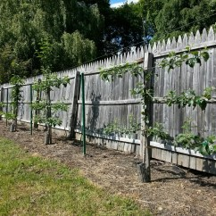 How To Prune An Apple Tree Diagram Wiring For 3 Way Light Switch Of Trees Does A Grow