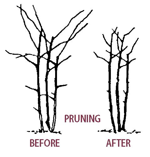 Addicted To Tree Pruning Brisbane ? Us Too. 6 Reasons We
