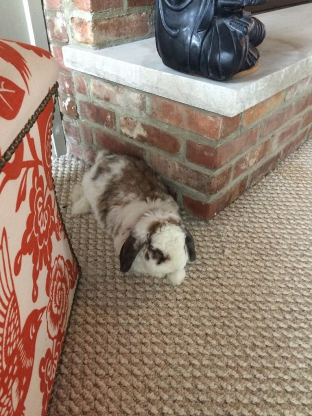 betsy flopped beside the fireplace