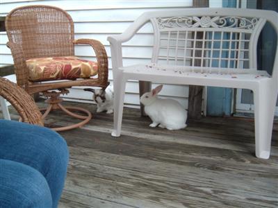 bunnies-on-moms-porch-001-custom.jpg