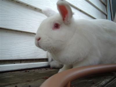 bunnies-on-moms-porch-004-custom.jpg