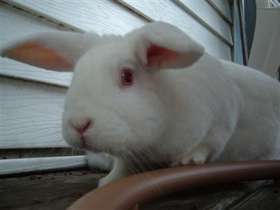 bunnies-on-moms-porch-005-custom.jpg