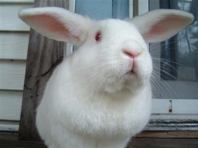 bunnies-on-moms-porch-015-custom.jpg