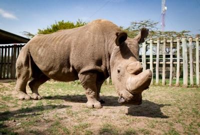 5 Endangered Species To See In Kenya