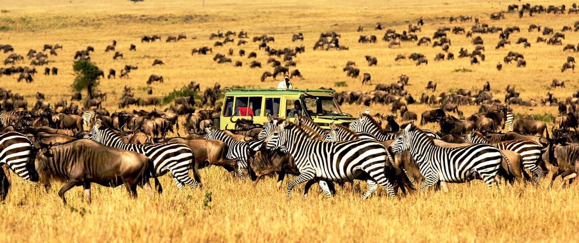 Zebras and wildebeest at Serengeti National Park