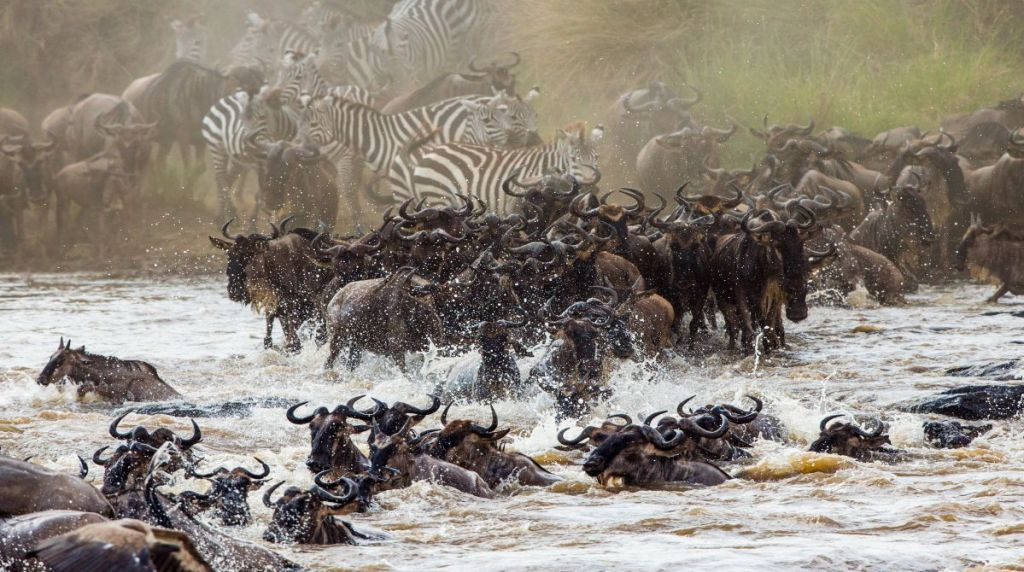 Great wildebeest migration in Serengeti