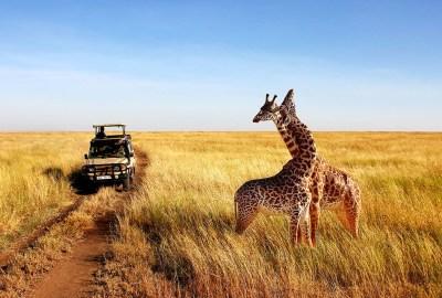 The Best Kenya Safaris From Nairobi