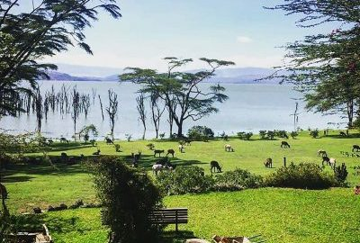 Langata-Link-Holidays-Sungura-Cow-Shed-Naivasha-Garden-400x284