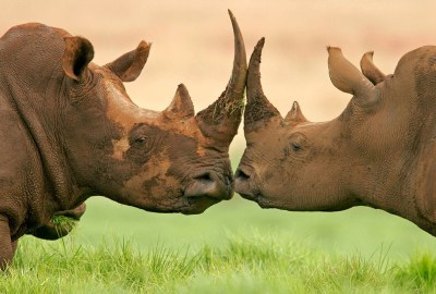 5 Tips for a Successful Kenya Safari
