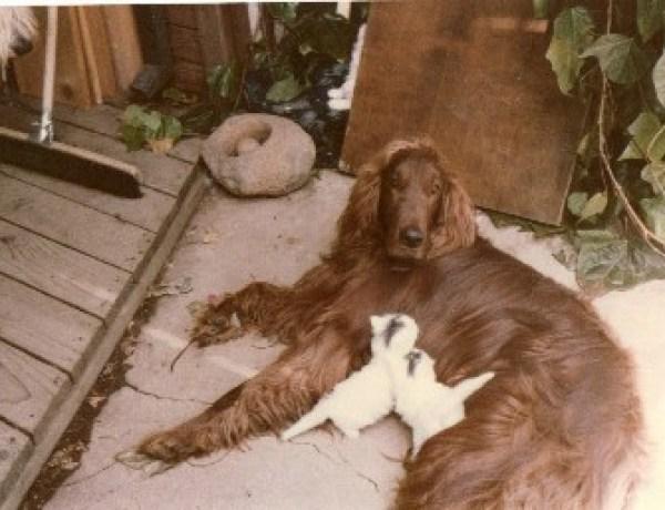 Une chanson pour le chien maltraité par Mitt Romney