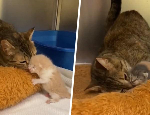 Cute : Une chatte retrouve ses chatons dans un refuge pour animaux
