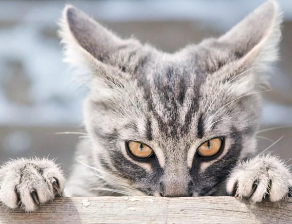 Ce chat est vraiment trop fourbe : il pousse discrètement son frère du haut d'une table
