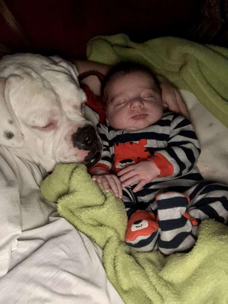 Finn & Brutus