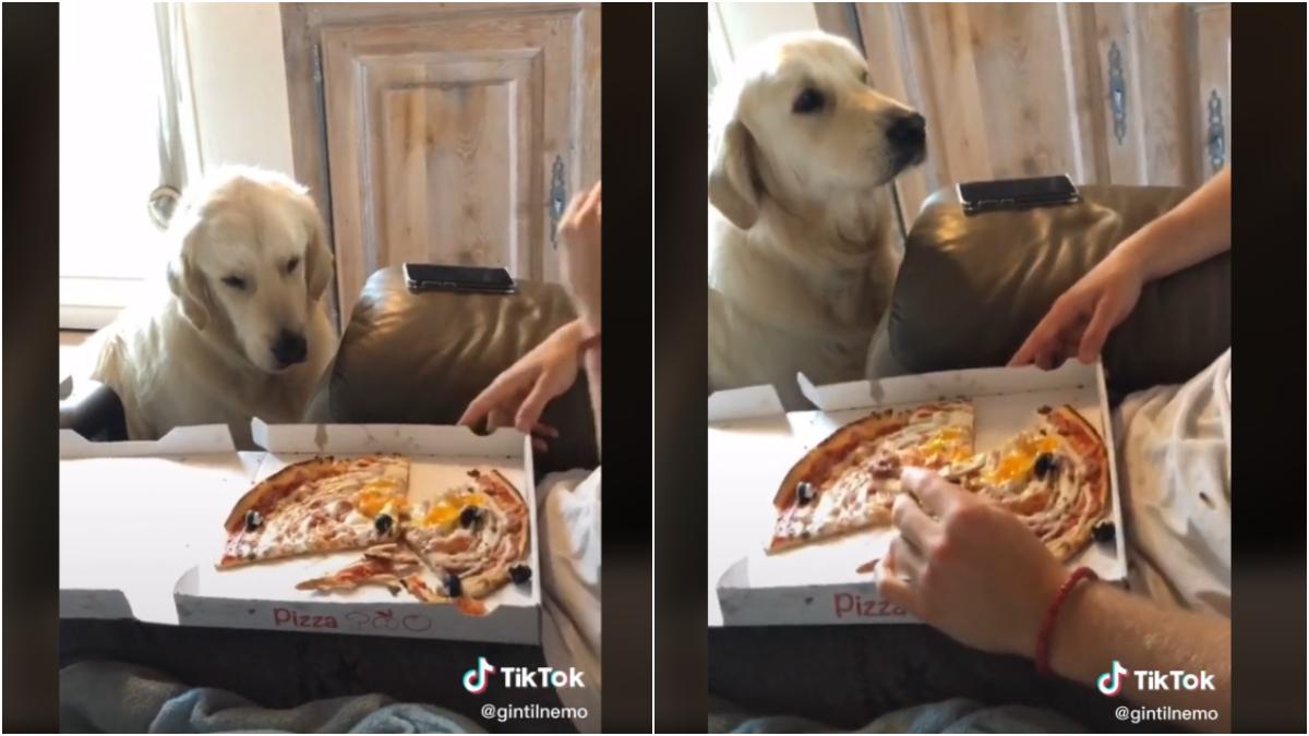 Ce TikTokeur fait parler son chien et c'est hilarant !