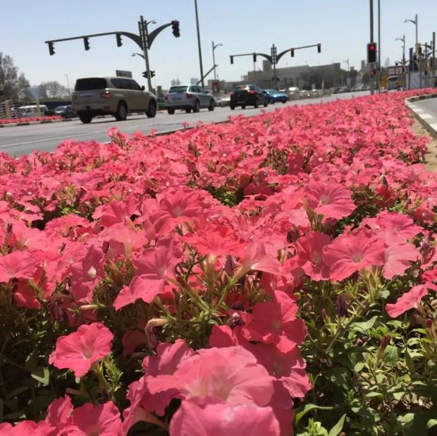 Dubai - Flowers Everywhere