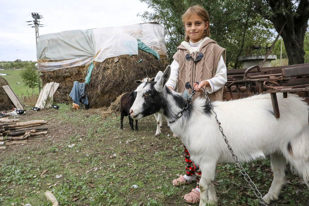 Goat 13