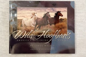 Wild Hoofbeats by Carol Walker has won many awards.