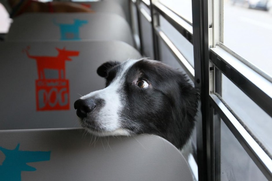 Rathe-Globe_Border collie on bus