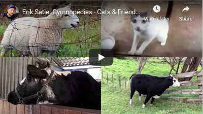 Cats and cows and Erik Satie