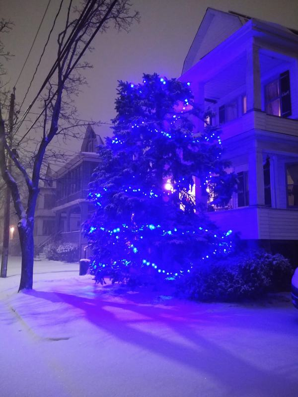 Tree out front, blue lights