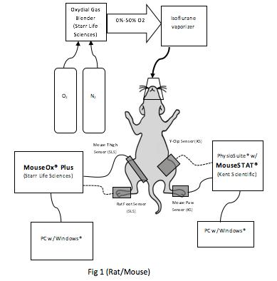 Kent Scientifics' MouseSTAT® vs MouseOx® Plus [White Paper]
