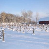 blaxta-winery_2