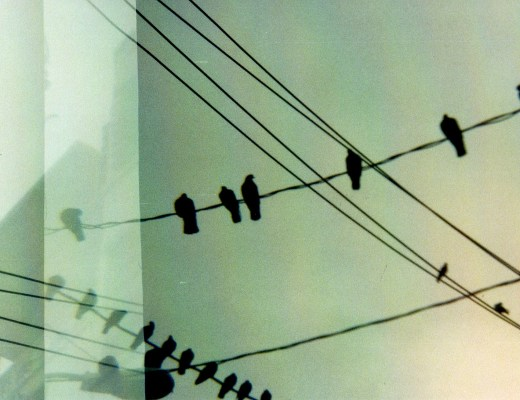 birds on a wire, diana photography