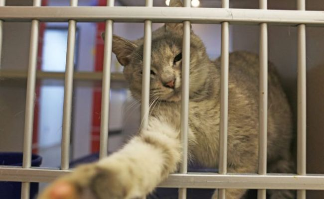 6 Most Recommended Brownsville Animal Shelter To Adopt Pet