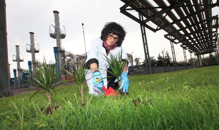 Καθαρίστε τη μολυσμένη γη με φυτά: τώρα μπορείτε