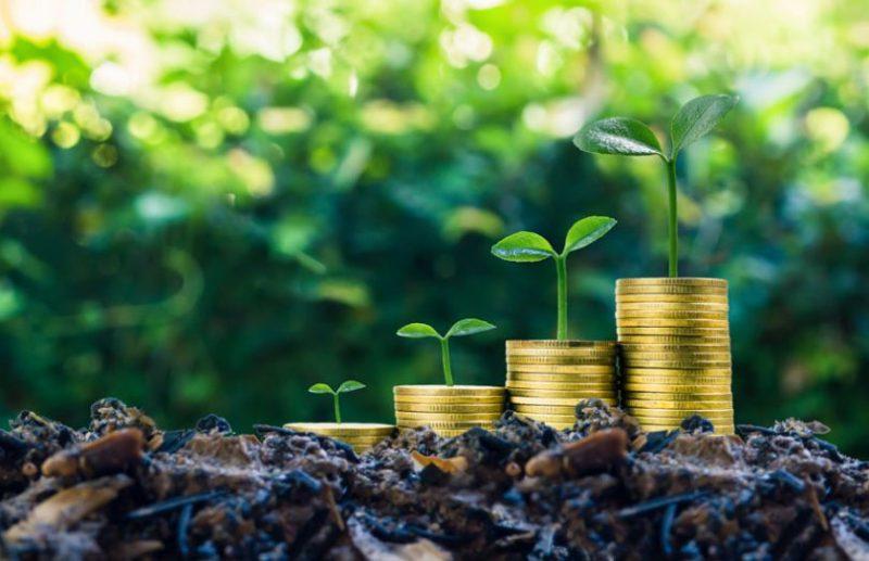 Почему Гринпис делает Generali черным против зеленых инвестиций
