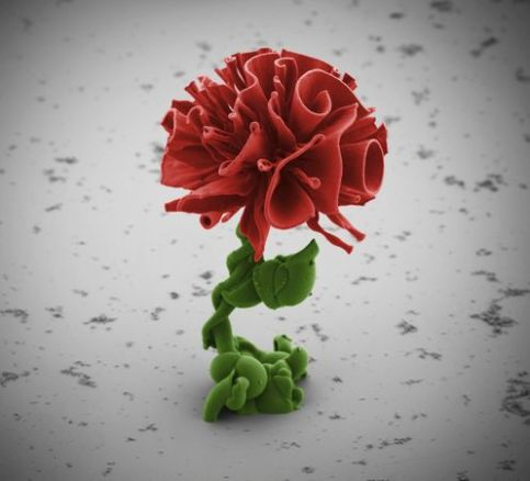 scientists-make-nano-flowers-red_67528_600x450